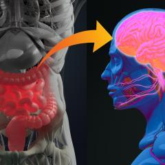 Honing in on the gut to tackle Parkinson's disease